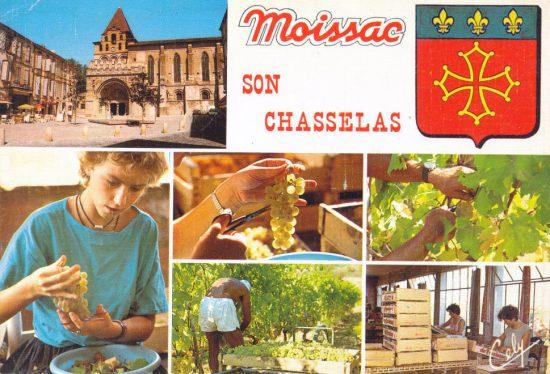Chasselas Moissac