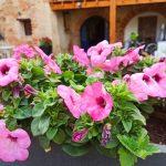 Fleurs et demeure